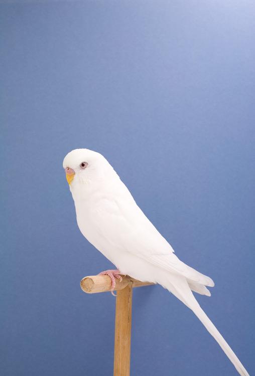 BIRD-10