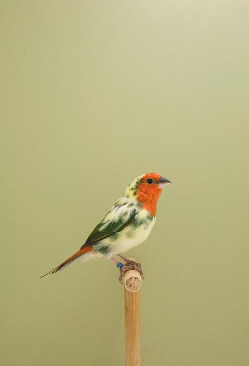 BIRD-8